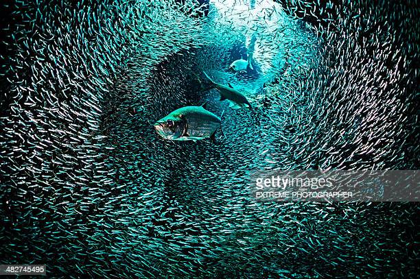 amazing fish tunnel - deep stock pictures, royalty-free photos & images