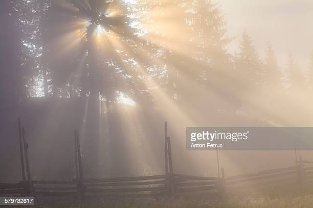 amazing foggy morning in the sunny forest - anton petrus stock pictures, royalty-free photos & images