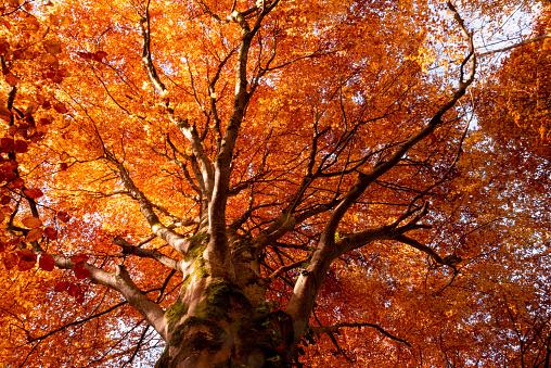 Amazing frests in autumn in Jura, Franche Comté - gettyimageskorea