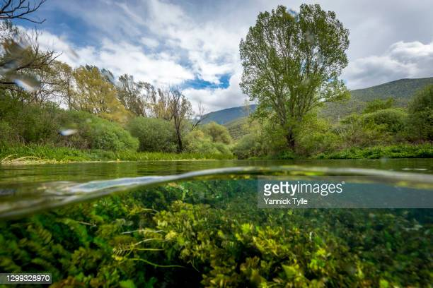 amazing nature of tirino river in gran sasso, abruzzo - parco nazionale d'abruzzo foto e immagini stock