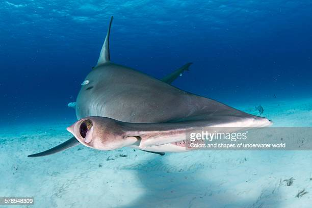 amazing - south bimini stock photos and pictures