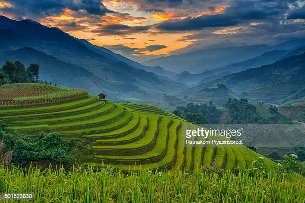 Amazing Rice terraces at Mu Cang Chai, Vietnam