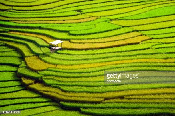 amazing rice terraces at mu cang chai, vietnam - stock photo - vietnamien photos et images de collection