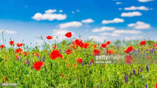 Amazing summer nature flowers sunlight day landscape.