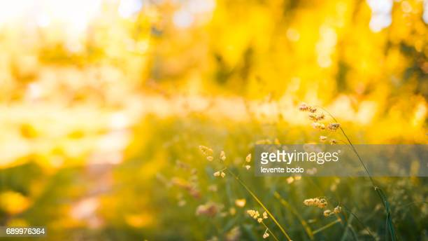 Amazing summer nature meadow flowers sunlight day landscape. Inspirational nature background