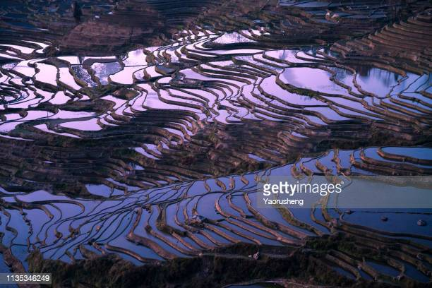 amazing sunset reflecting on the yuanyang rice terraces, dusk, elevated view - yuanyang stock pictures, royalty-free photos & images