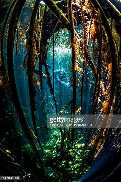 Amazing underwater caverns
