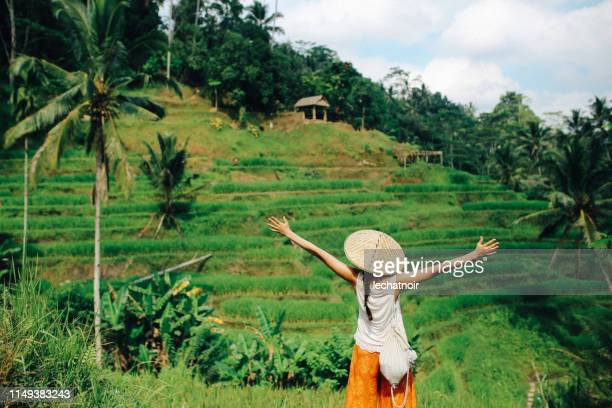amazing view over the rice fields in indonesia - indonesian culture stock pictures, royalty-free photos & images