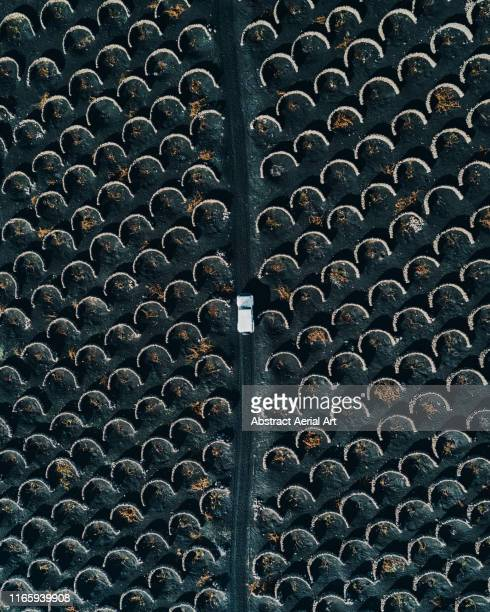 amazing volcanic vineyards and off road vehicle as seen from above lanzarote - unusual angle stock pictures, royalty-free photos & images