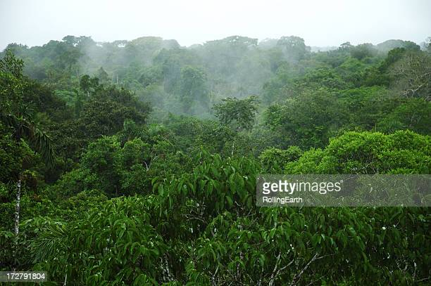 amazon canopy - peruvian amazon stock pictures, royalty-free photos & images