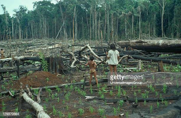 Amazon Cinta Larga indians in slash and burn created garden Brasil Paitinim or 'Broad Belt Indians' due to a belt of tree bark worn about the waist