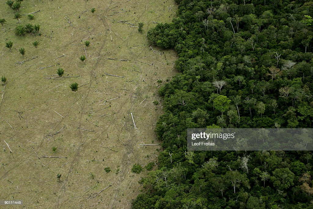 Amazon Deforestation for Cattle : Stock Photo