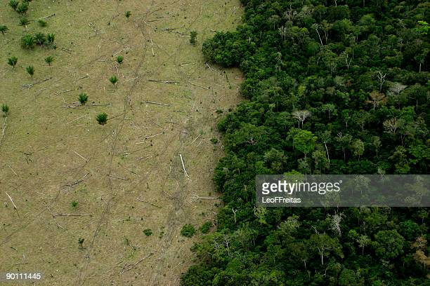 amazon deforestation for cattle - deforestation stock pictures, royalty-free photos & images