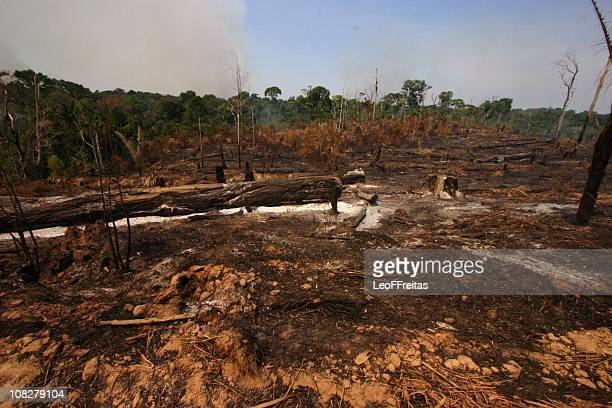 amazon deforestation - deforestation stock pictures, royalty-free photos & images