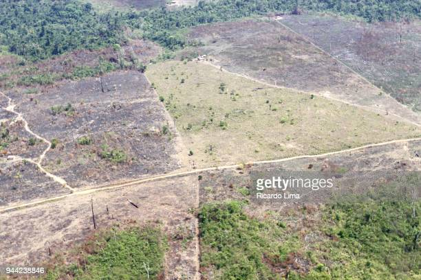amazon deforested area - destruição - fotografias e filmes do acervo