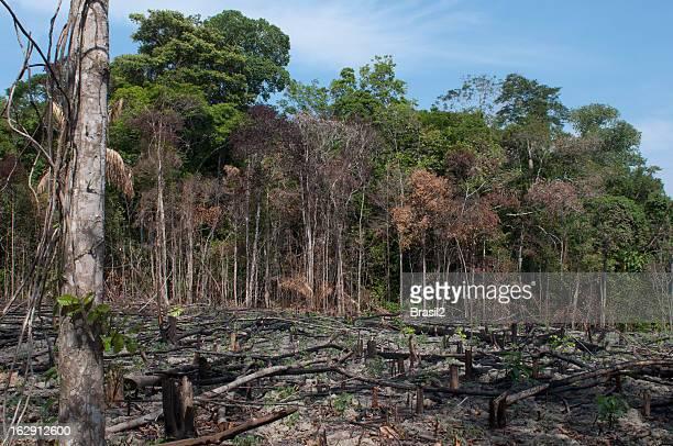 amazon destruction - deforestation stock pictures, royalty-free photos & images