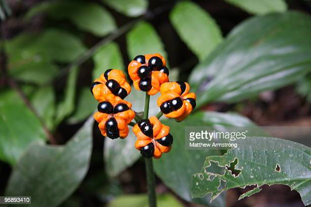 amazon jungle flower, peru - peruvian amazon stock pictures, royalty-free photos & images