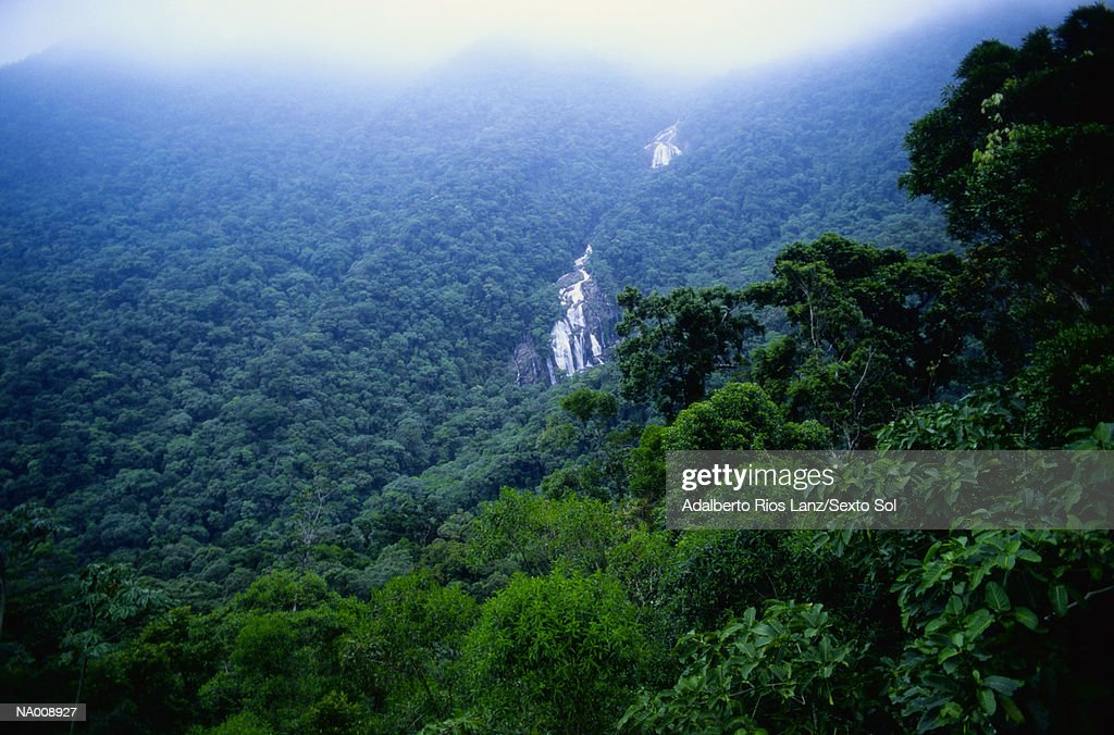Amazon Jungle : Stock Photo