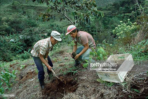 Amazon Peru Reforestation This Area Has Been Heavily Logged By A Timber Company Who Under Pressure From Environmentalists Have Decided To Plant...