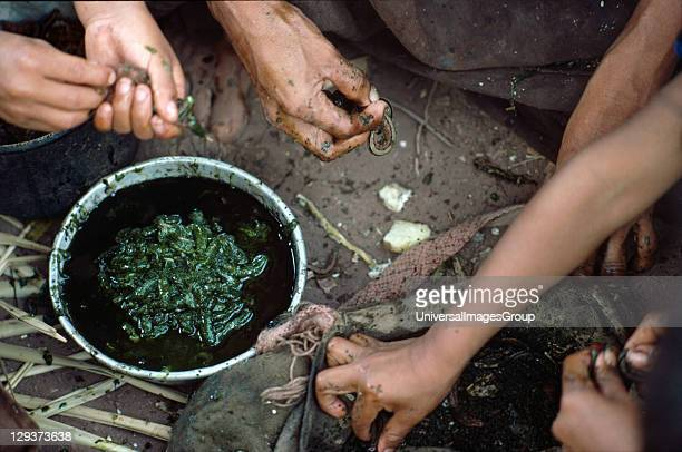 Amazon Peru Vicinity Satipo Campa Or Ashaninka Indians Homelife They are hunter gatherers living from the jungle without destroying it It takes about...