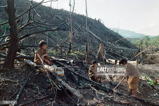 Amazon - Peru, Vicinity Satipo, Deforestation And Destruction On Ashaninka Land, Campa or Ashaninka Indians are hunter gatherers living from the...