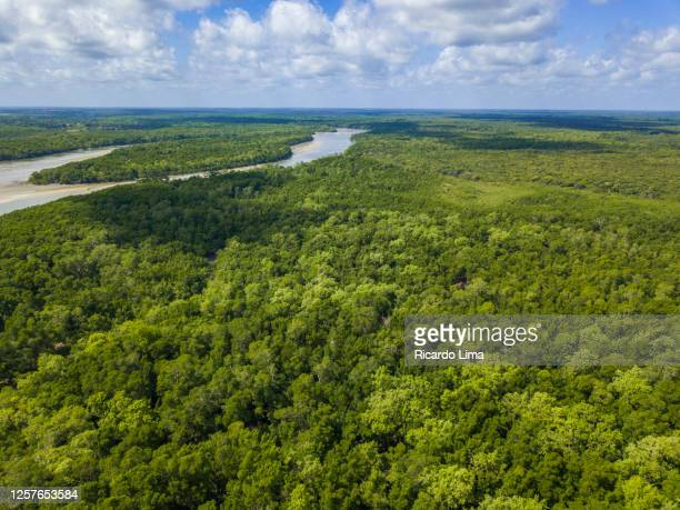 amazon rainforest - aerial view - amazon region stock pictures, royalty-free photos & images