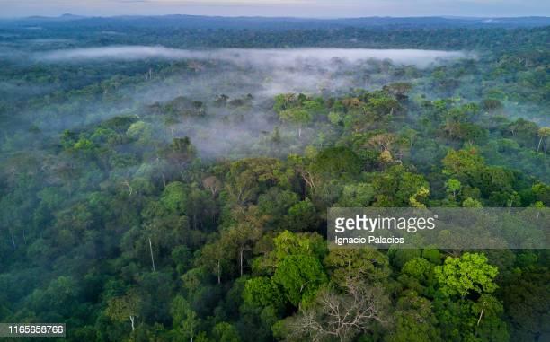 amazon rainforest, brazil - amazon region stock pictures, royalty-free photos & images