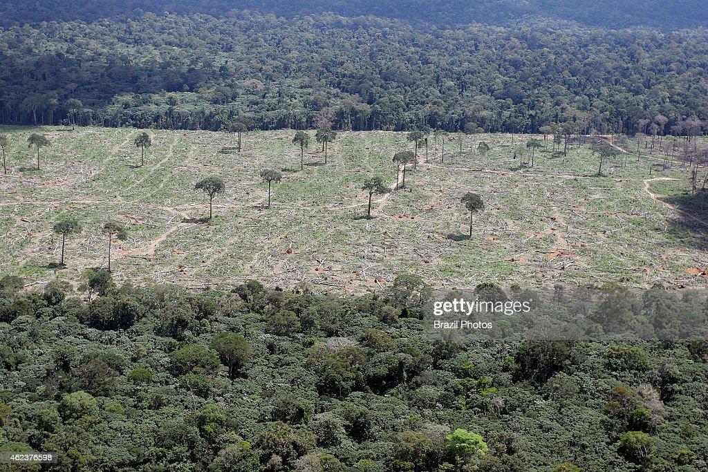 Amazon rainforest clearance for agriculture, near Santarem... : News Photo