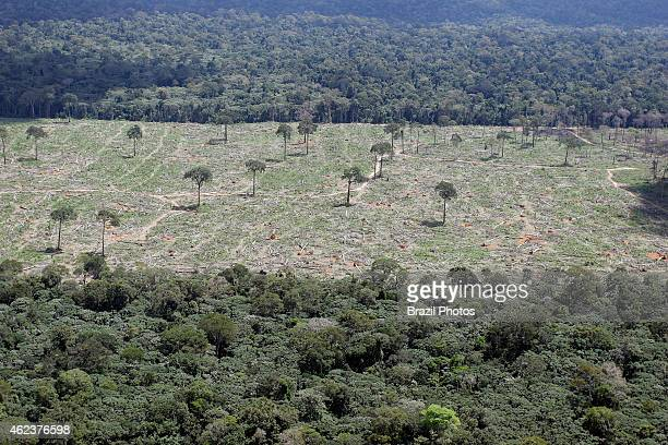 Amazon rainforest clearance for agriculture near Santarem deforestation for the agribusiness economic development creating ecological unbalance...