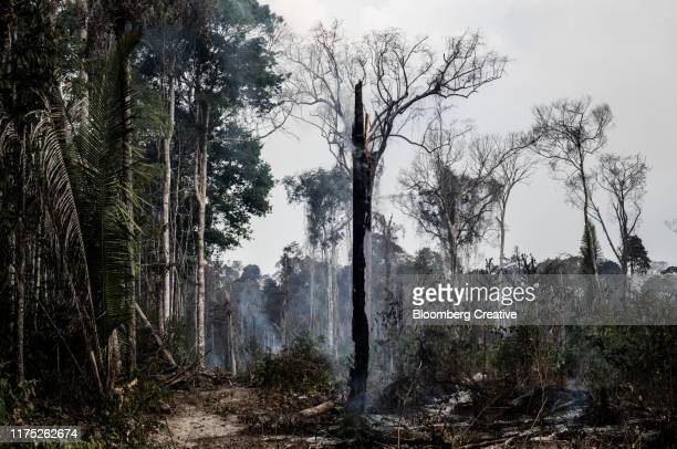 amazon rainforest fires - amazon rainforest burning stock pictures, royalty-free photos & images