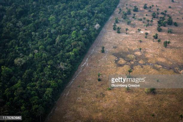 amazon rainforest fires - vernieling stockfoto's en -beelden