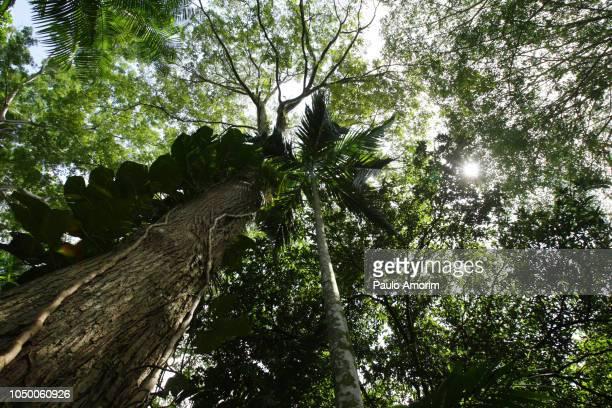 amazon rainforest in belém,brazil - amazon rainforest stock pictures, royalty-free photos & images