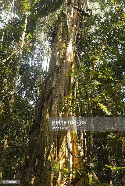 amazon rainforest landscape, tree trunk - forens stock pictures, royalty-free photos & images
