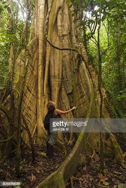 Amazon rainforest landscape, tree trunk