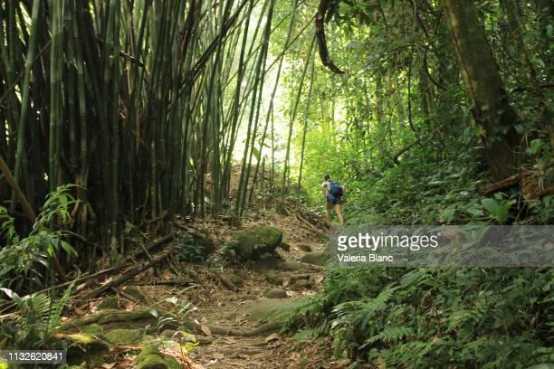 amazon rainforest - amazon region stock pictures, royalty-free photos & images
