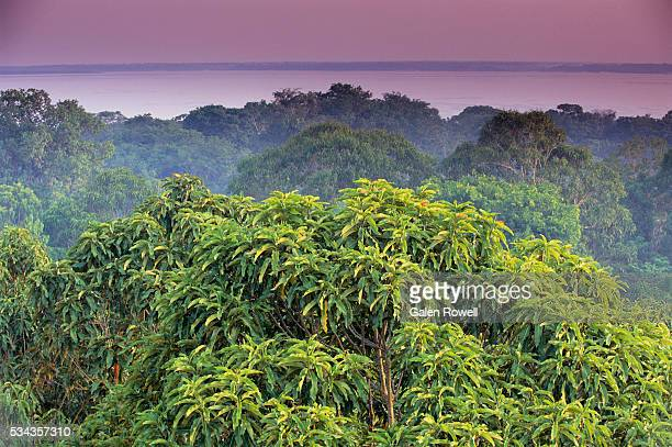 amazon rainforest treetops - river amazon stock pictures, royalty-free photos & images