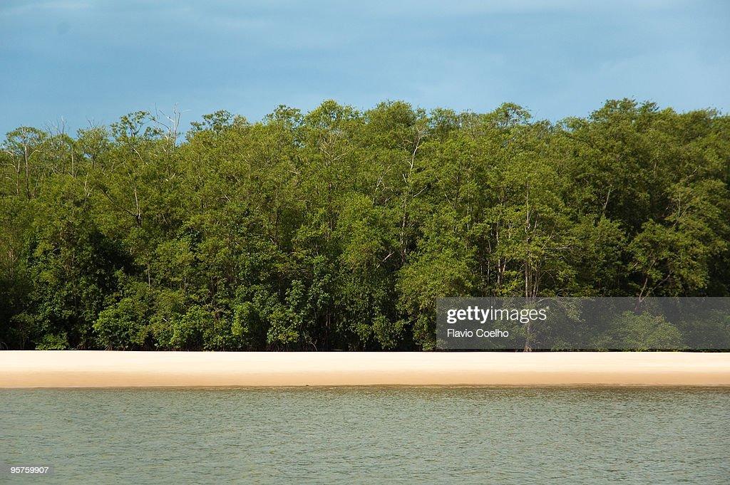 Amazon river beach : Stock Photo