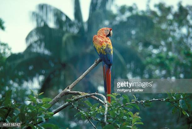 Amazon River Rain Forest Upper Canopy With Macaw