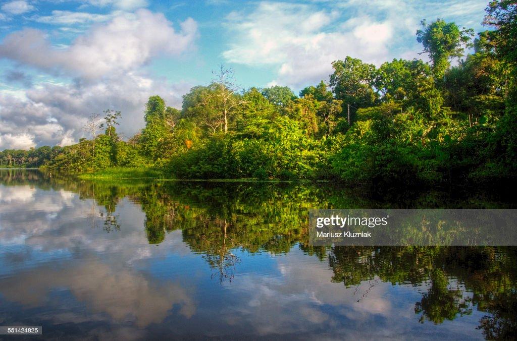 Amazon river shore rainforest reflections : Foto de stock