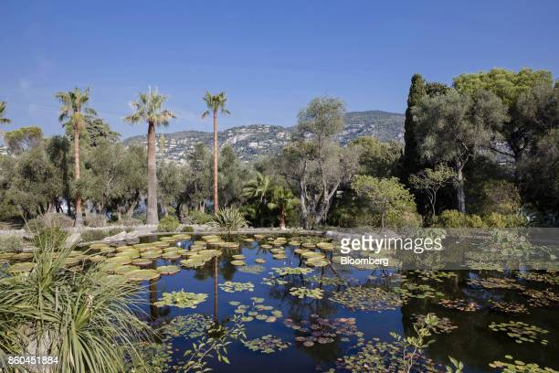 Amazonian lily pads rest on the manmade pond in the botanical gardens at the Villa Les Cedres a 187yearold000squarefoot 14bedroom mansion set on 35...