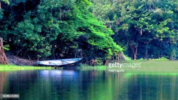 Amazon's Green