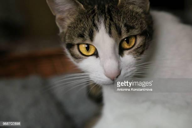 Amber cat sight