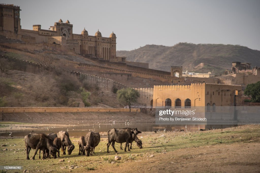 Amber Fort Or Amer Fort In Jaipur Rajasthan India Stock Photo