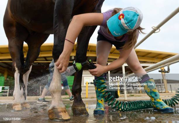 Amber Nusser washes her horse Bill Friday morning on the first day of the Boulder County Fair This year's fair includes a craft distillery festival...