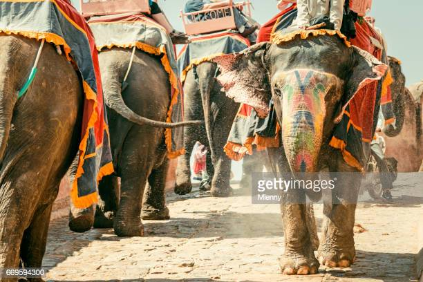 amber palace indian elephants convoy jaipur india - mlenny photography stock pictures, royalty-free photos & images