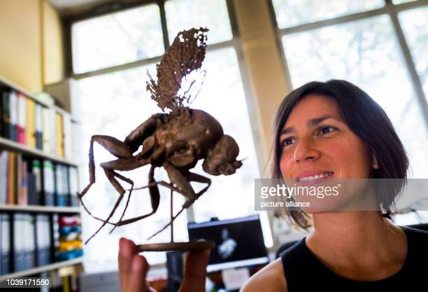 Amber researcher Monica Solorzano Kraemer holding up an oversized 3D print of a Phoridae fly at the collection of the Senckenberg Society for Nature...