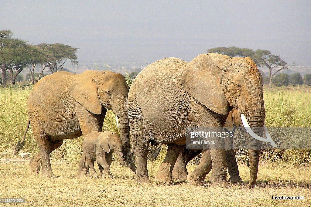 Amboseli : Stock Photo