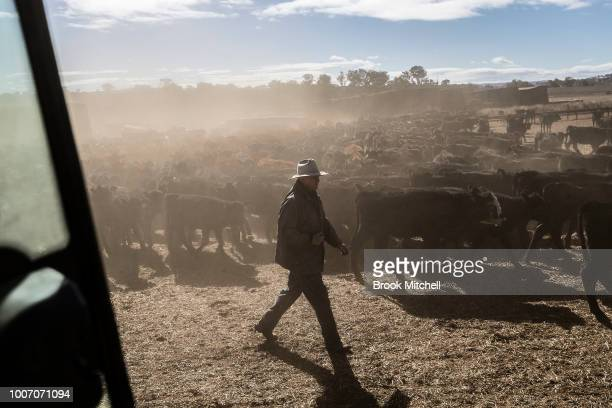 Ambrose Doolan works with his wife Lisa on their propery outside Coonabrabran In the Central Western region of New South Wales Australia farmers...