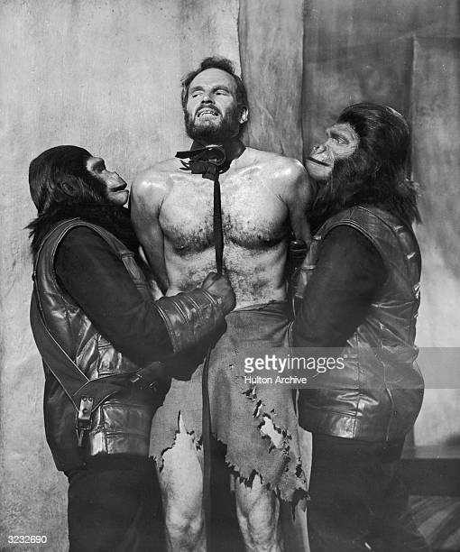 American actor Charlton Heston is restrained by a leash and collar by two actors playing apemen in a still from director Franklin Schaffner's film...