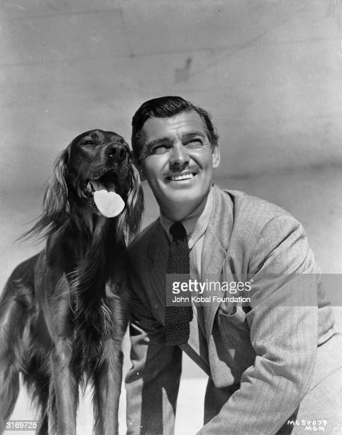 American actor Clark Gable posing with a red setter